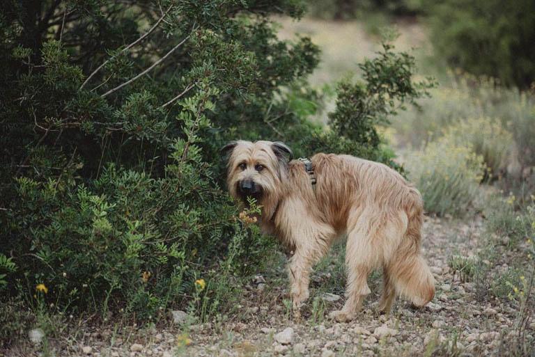 aprende fotografia con tu perro