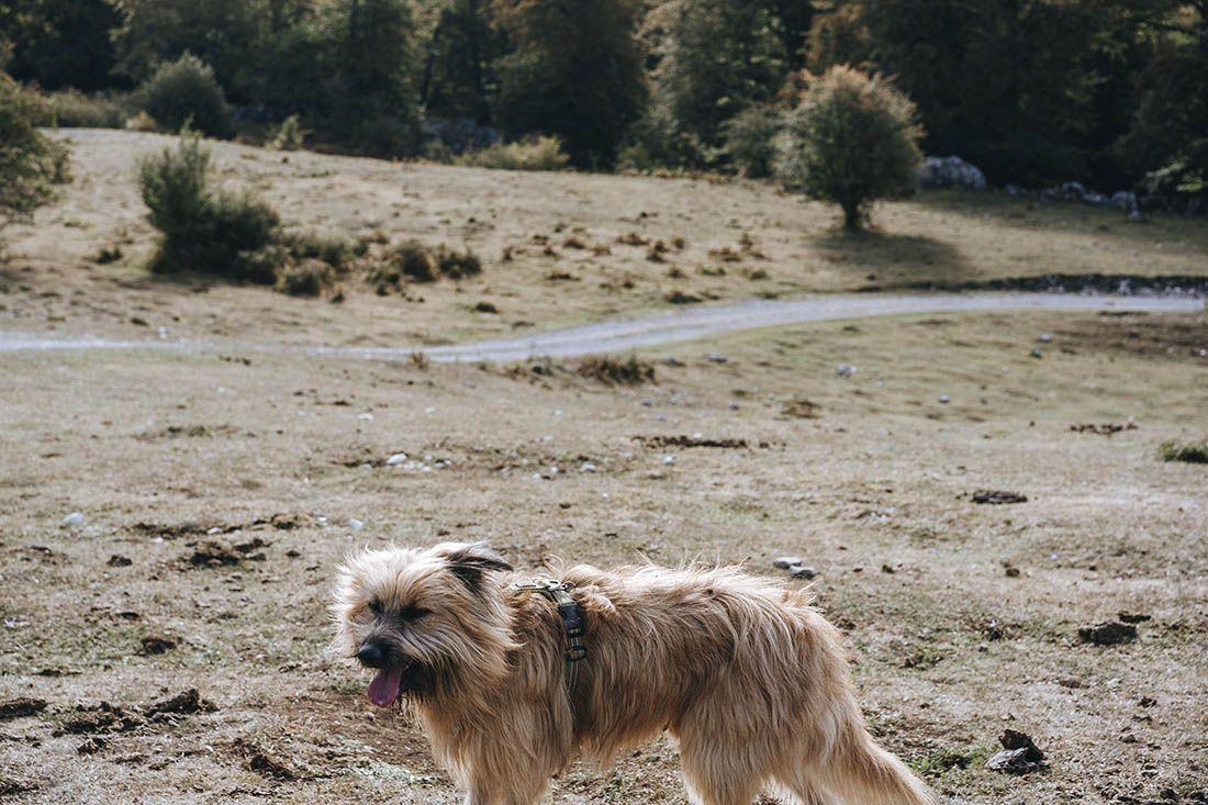 podcast fotografia canina
